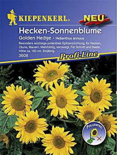 Kiepenkerl Helianthus Golden Hedge - Vorschau