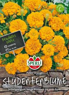 Sperli Studentenblume Petite Orange 1