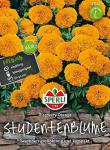 Sperli Studentenblume Discovery Orange