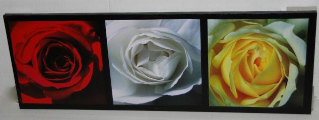 XXL Bilder Leinwand Keilrahmen Bild Canvas Bilder ROSEN BLUMEN 40X120FLOWER