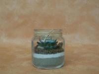 Kerze Kaktus im Glas