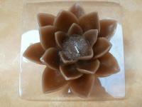 Kerze-Lotusblume in braun