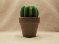 Kerze Kaktus im Topf