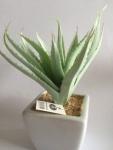 GILDE Sukkulente Deko-Kaktus im Keramiktopf, 12 cm
