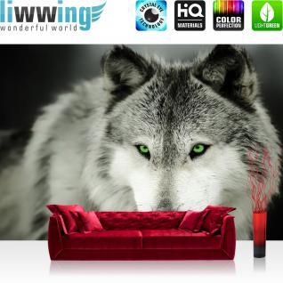 liwwing Vlies Fototapete 416x254cm PREMIUM PLUS Wand Foto Tapete Wand Bild Vliestapete - Tiere Tapete Wolf natur Augen grün schwarz weiß - no. 2401