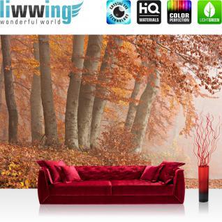 liwwing Vlies Fototapete 400x280 cm PREMIUM PLUS Wand Foto Tapete Wand Bild Vliestapete - Wald Bäume Natur - no. 255