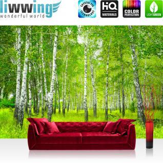 birkenwald fototapete online bestellen bei yatego. Black Bedroom Furniture Sets. Home Design Ideas