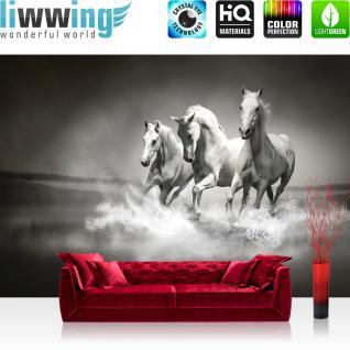 liwwing Vlies Fototapete 350x245 cm PREMIUM PLUS Wand Foto Tapete Wand Bild Vliestapete - Tiere Tapete Pferd Wasser Schimmel Rennpferd schwarz - weiß - no. 1015