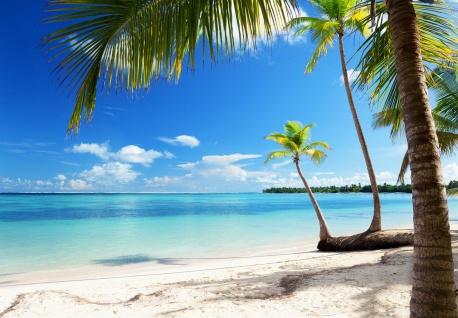 Vlies Fototapete Strand, mit Palmen und Meer
