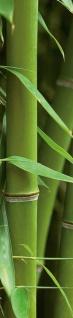 Wandtattoo Bambus, selbstklebend