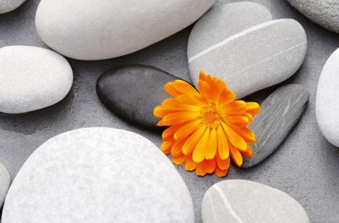 XXL Poster Wellness, Steine und Blume