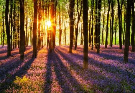 Vlies Fototapete Wald, mit Sonnenstrahlen und Blumen