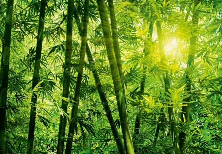 Fototapete Bambus Wald Grün