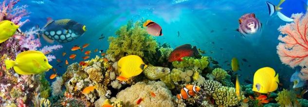 Vlies Fototapete Unterwasser Meer, Fische