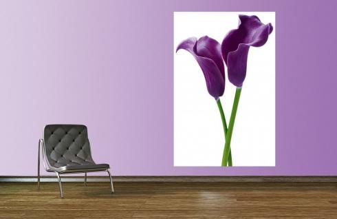 XXL Poster Blume Calla, Lilie Violet - Vorschau 2