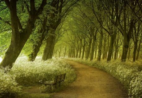 Vlies Fototapete Traumhafter Waldweg, als optische Vergrößerung