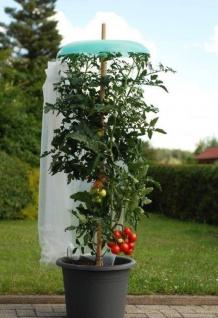 Starter Set Tomatenhut