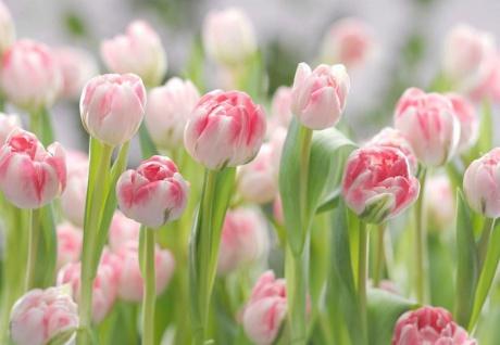 Fototapete Secret Garden