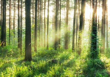 Vlies Fototapete Wald, mit Sonnenstrahlen