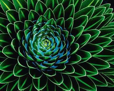 Vlies Fototapete Pflanze, als Kunst