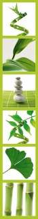 Wandtattoo Wellness Pflanzen und Bambus, selbstklebend