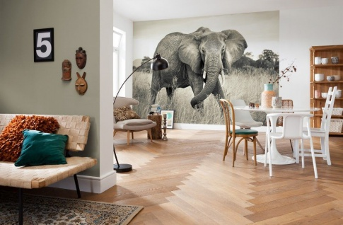 Vlies Fototapete Elephant