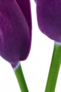 XXL Poster Blume Calla, Lilie Violet - Vorschau 3
