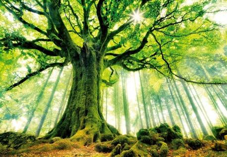 Vlies Fototapete Wald, mit wunderschönem Baum