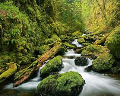 Vlies Fototapete Wasserfall, im Wald