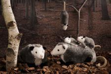 Kösener Plüschtier Opossum