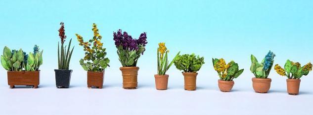 Noch 14011 Zierpflanzen in Blumentöpfen