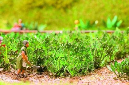 Noch 14112 Laser-Cut minis Zucchini
