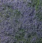 Woodland Scenics F177 Blüten-Foliage lila