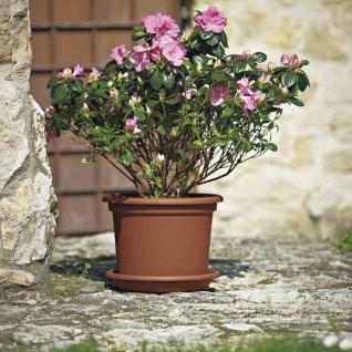 Kübel GEO Ø35cm terracotta Blumenkübel Blumentopf Pflanzen Blumen Garten Balkon