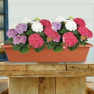 Blumenkasten Terrakotta 79cm Balkonkasten Pflanzkasten Blumentopf Bewässerung