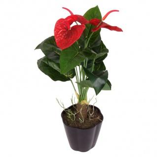 Künstliche Anthurium Blume im Topf 48cm Kunstblume Kunstpflanze Zimmerpflanze