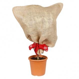 Jutesack natur Pflanzen-Schutzsack Winterschutz Pflanzenschutz Frostschutz 57x78