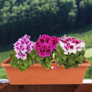 Blumenkasten terrakotta 59cm Balkonkasten Pflanzkasten Blumentopf Bewässerung