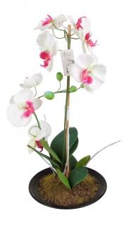 Künstliche Orchidee 2 Rispen Weiß/Pink 50cm Kunstblume Phalaenopsis Kunstpflanze
