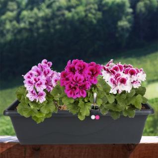 Blumenkasten anthrazit 59cm mit Bewässerung Balkonkasten Pflanzkasten Blumentopf