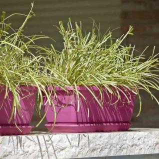 Kasten Inis 50cm cyclam Pflanzkübel Pflanztöpfe Terrasse Pflanzen Blumen Garten
