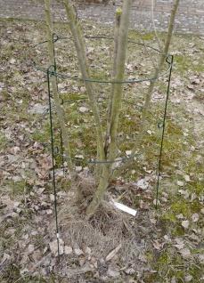 Rosenstütze Metall 60x35 Blumenstütze Strauchstütze Pflanzenhalter Staudenhalter