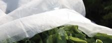 GREEN TOWER GT Frühbeet-Vlies Fruehbeetvlies 1, 5x10mtr