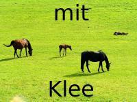 25 KG Grassamen Pferdeweide mit Klee
