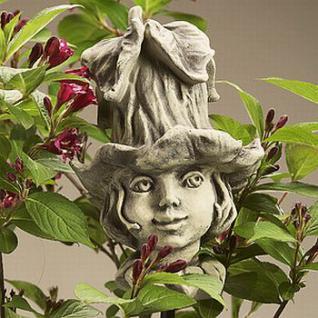 Blumenkind Glockenrebe für den Garten & Balkon