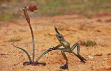 Bronzefigur Frosch mit Libelle, Tierfigur aus Bronze, Regenwald, Dschungelfrosch