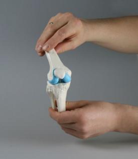 Knie Modell - Vorschau 4