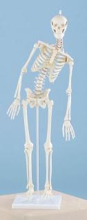 Miniatur - Skelett