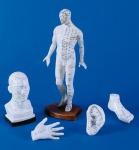 Akupunktur Modelle Set