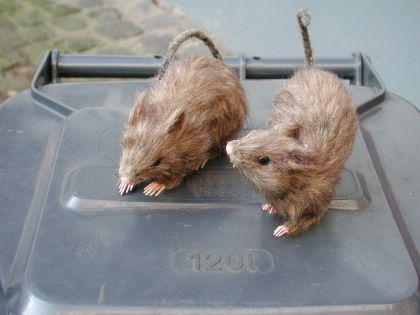 Ratte Fell ca. 15 cm Fellratte sehr echt wirkend Ratte deko Dekoratte - Vorschau 1